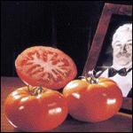Tomatoes - Baron