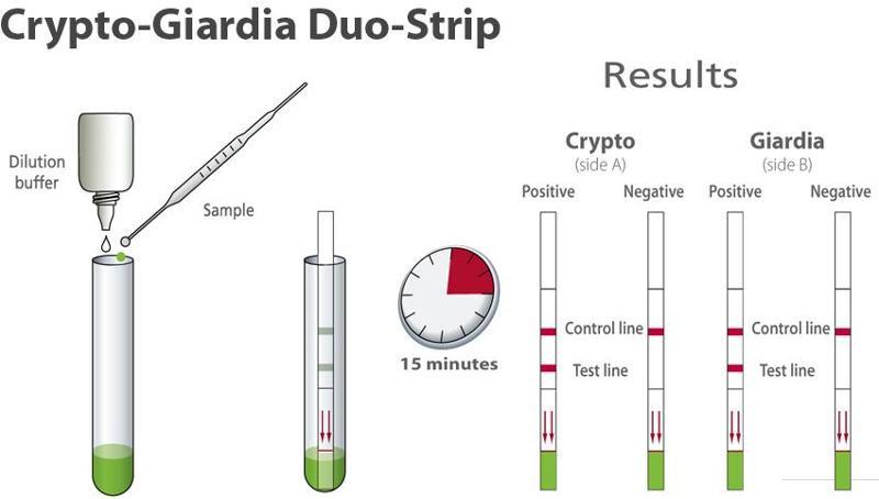 test Dipstick - detection of Cryptosporidium & Giardia :  - null