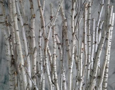 paravent troncs de bouleaux troncs de bouleaux deco nature france