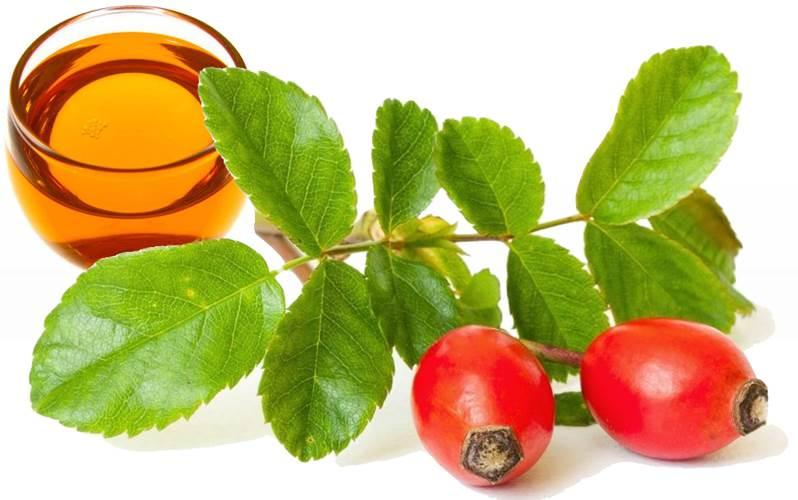 Organic Rosehip Oil - cold pressed, European - ROSA CANINA SEED EXTRACT