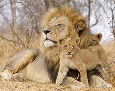 3 Days Masai Mara Safaris