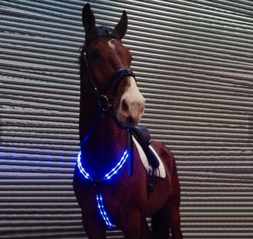 harness for horse dog leash clip with battery - battery flashing led light horse harness