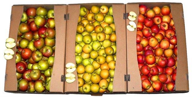 Упаковка для яблок