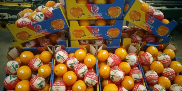 Arancia fresca egiziana dell'ombelico - Organica