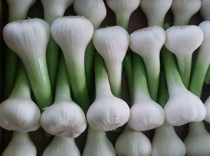 Garlic - white Garlic