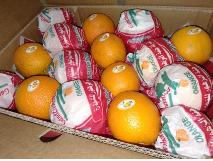 """Valencia naranja - """"Egipcia"""""""