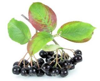 Aronia - Fruit entier