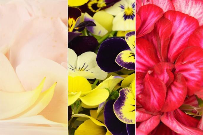 Assortiments de diverses variétés de fleurs - Fleurs comestibles