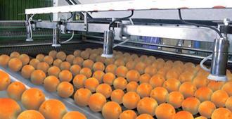 Harvest Protection - MAFEX-Potato-Fruit