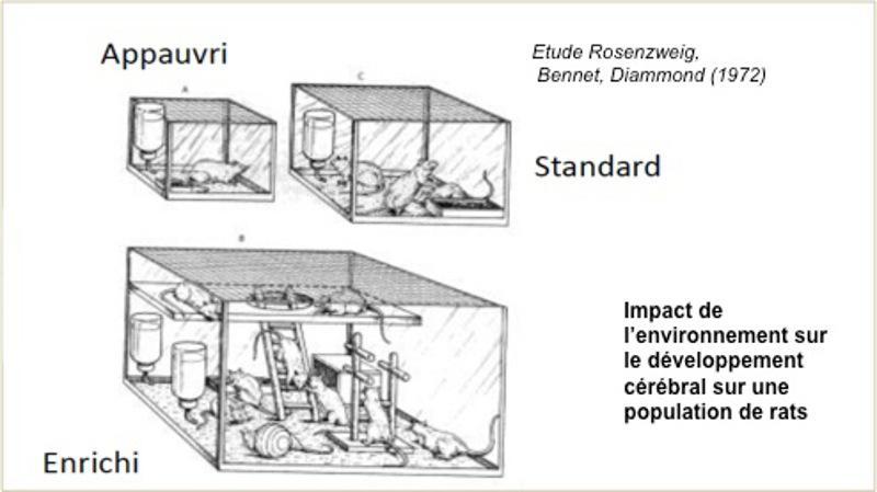 Jardin stimulation sensorielle - Service