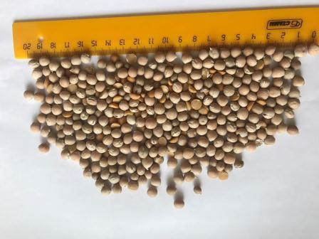 Yellow peas - Yellow peas for export - FCA 180 EUR/MT big-bags