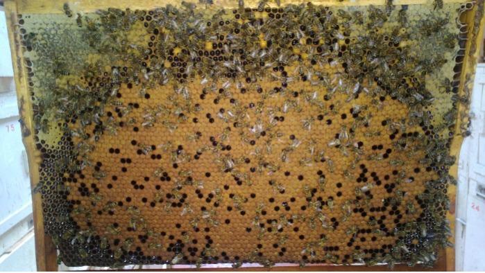 Honey - Natural Adygei honey