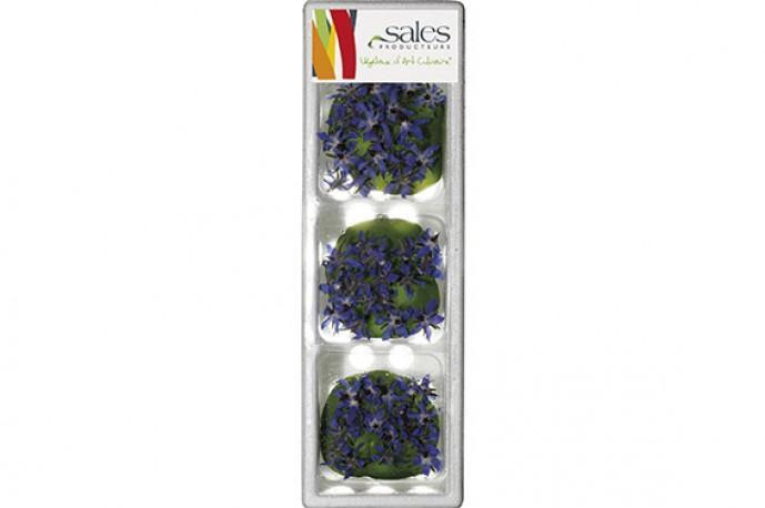 Bourrache - Fleurs comestibles