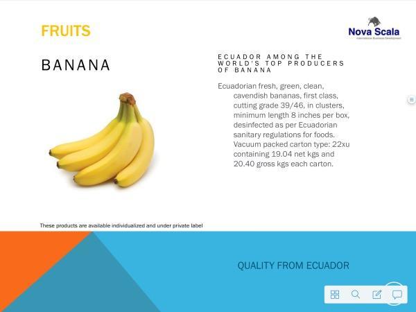 Bananen aus Ecuador