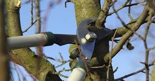 Potature - Potature specialistiche alberi, abbattimento piante pericolanti o danneggiate