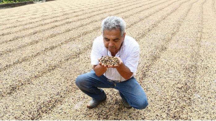 Café verde Catuai Vermelho 144 brasileiro a €5,82/kg - Café arábica de 84 pontos, disponível para exportação global