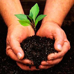 Fertilizantes - Abonos