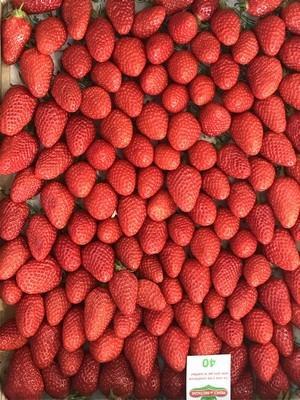 Grossiste fraises RUNGIS