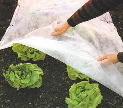 Voile de protection pour plantes et légumes - ProtecMax™