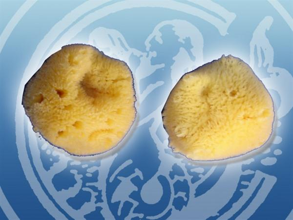 Natural sea sponges - ... the best money can buy
