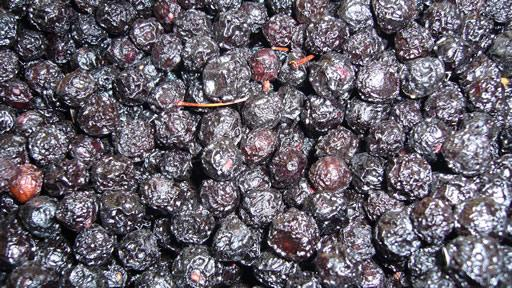 Organic Dried Sour Cherry