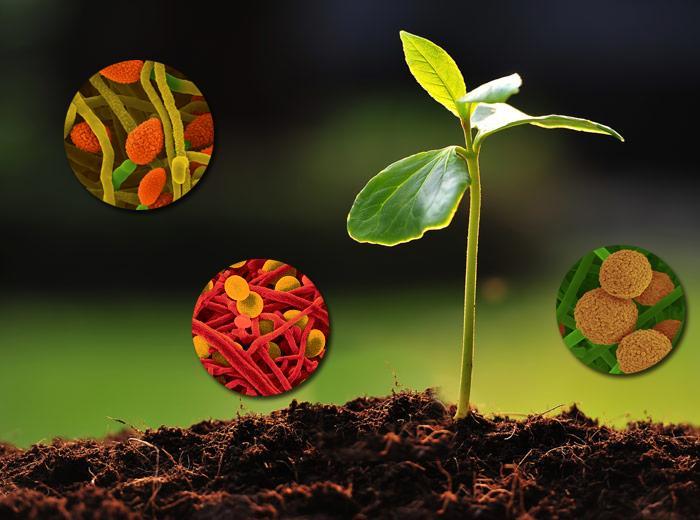 OligoActiv Foliar Plus - Foliar fertilizer with macro and micro-nutrients amd aminoacids