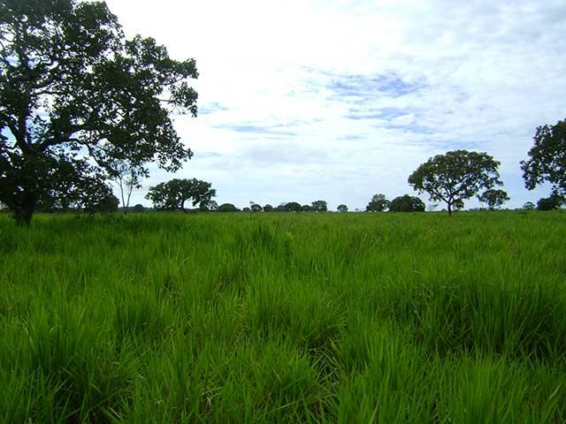 Farmland for sale in Tocantins Brasil - Reference: FARM TO-002