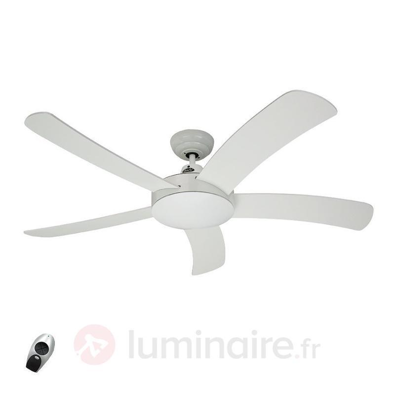Ventilateur de plafond bois Falcetto - Ventilateurs de plafond modernes