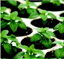 Remix 2 - Fertilizers