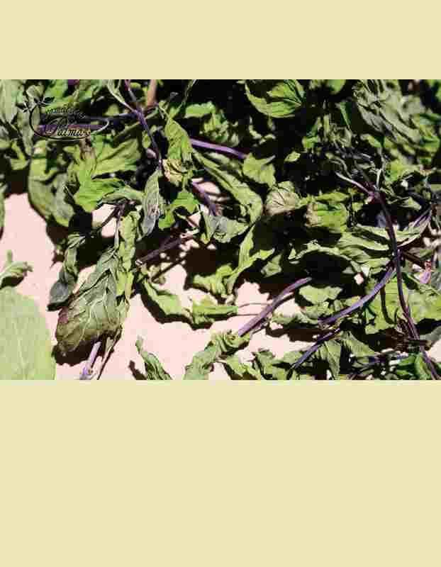 Hortelã-Pimenta - Hortelã-Pimenta biológica