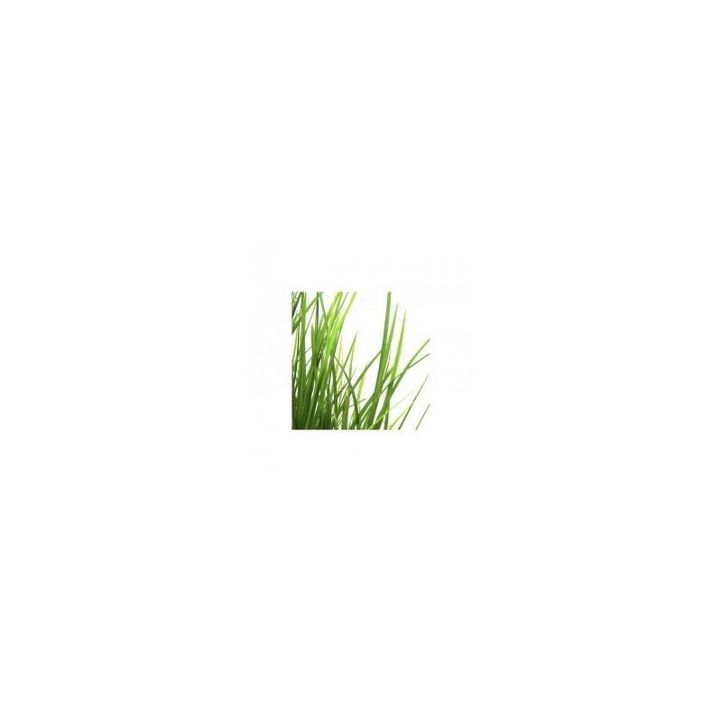 Huile Essentielle De Palmarosa Bio - Huiles essentielles