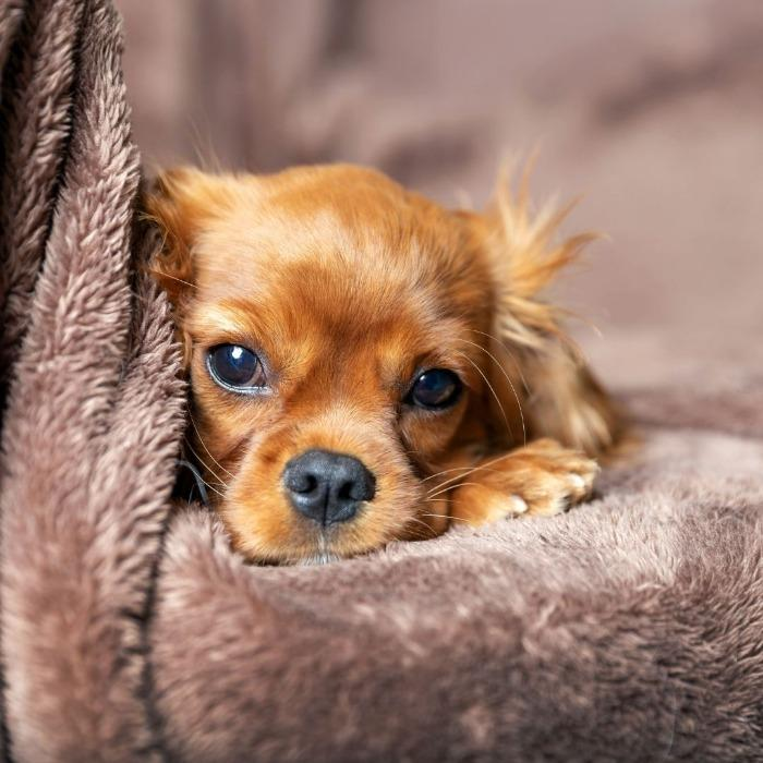 Pet Fleece Blanket -