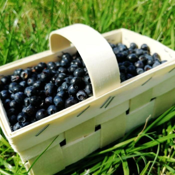 Cestas con asas  - Ideal para envasado de frutas y verduras