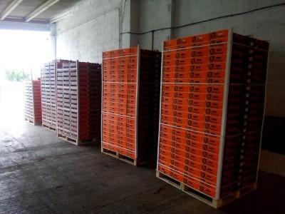 Fruit Export - We export around all Europe