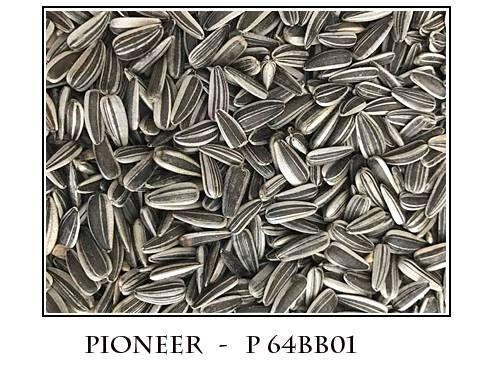 Striped sunflower seeds
