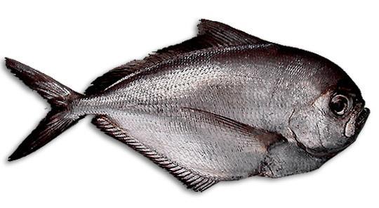 Maricoltura Decapitatrice Evisceratore Filettatrice pesce