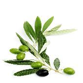 oliveactive Omega9