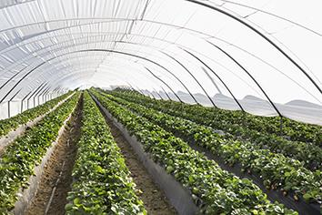 AGROLUX® FILM FOR USE IN AGRICULTURE - Agricultural films