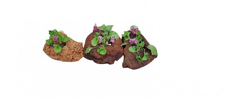 Flower  pot - flower pot