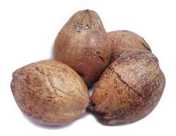 Kokosnuss / Kokosnüsse  - (getrocknet)