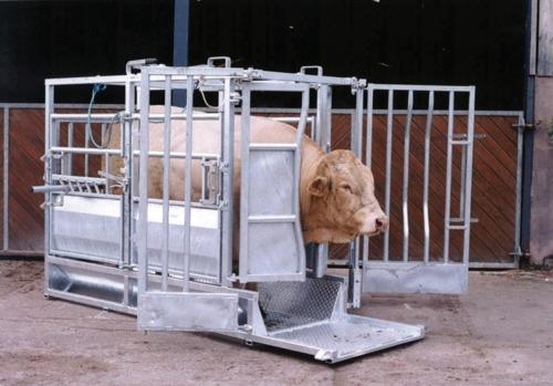 Champion Beefmaster Cattle Crush - Cattle crushes