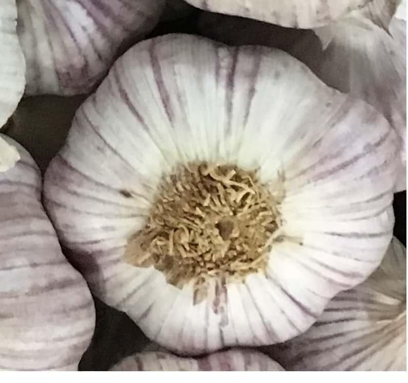Spanish garlic, ajo español -
