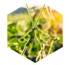 L'huile de soja - Matières premières