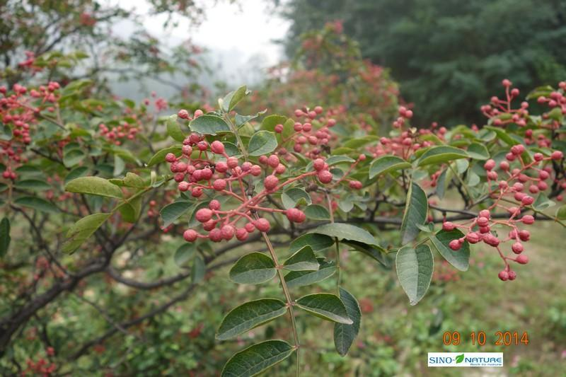 Sichuan pepper - Peels no seeds