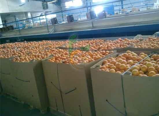 bins orange
