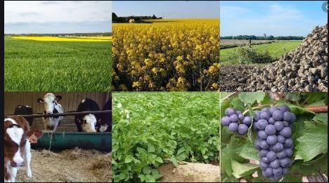 CHAMBRE D'AGRICULTURE, DES PÊCHES, DE L'ÉLEVAGE ET DES FORÊT - CHAMBRE D'AGRICULTURE, DES PÊCHES, DE L'ÉLEVAGE ET DES FORÊT