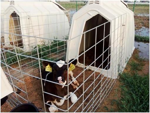 calf hutches - calf pen,calf hut