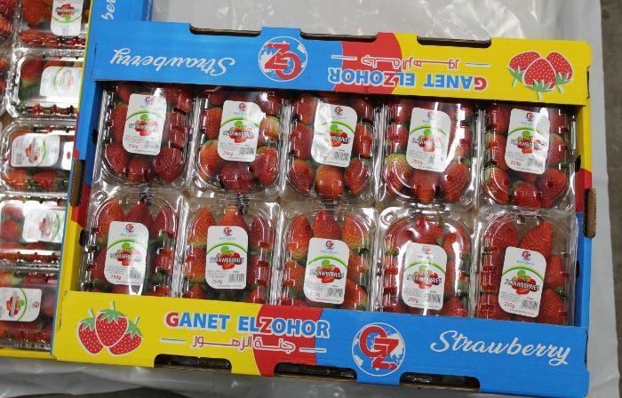 Fresas egipcias frescas - Orgánica