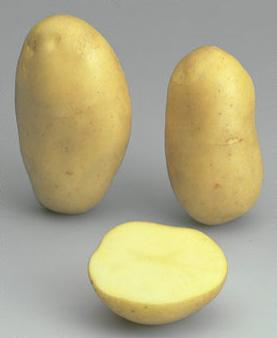 Potatoes - Yellow skin - ESTIMA