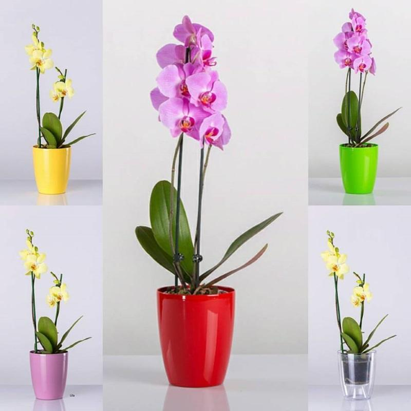 Orchid flowerpot